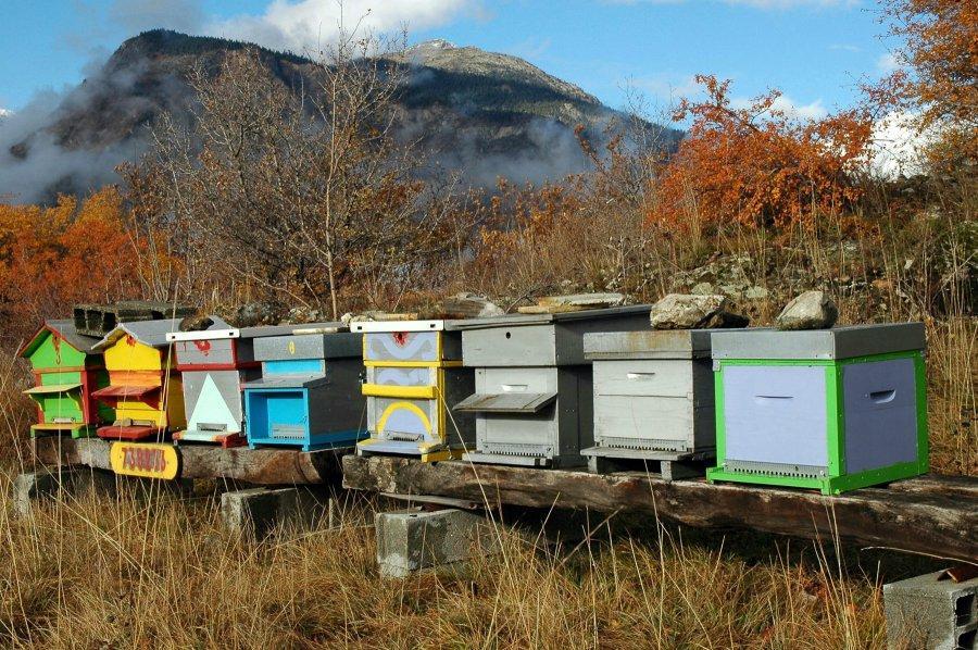 Exemple de Rucher dans lequel vous pouvez produire du miel