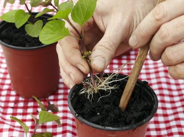 Tous les conseils pour remettre son jardin en état au mois de mars.