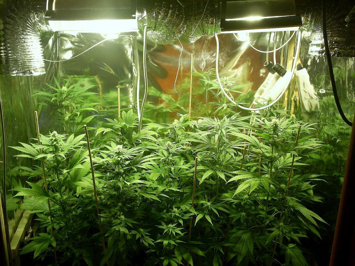 Cannabis thérapeutique : le justice toujours inflexible