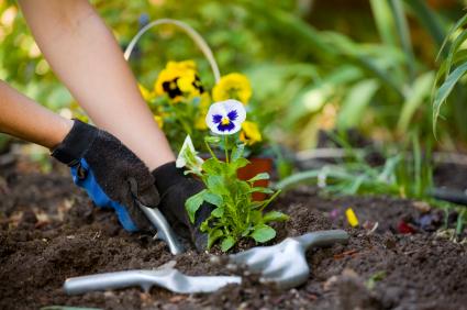 Entretien du jardin : les conseils de notre jardinier pour le mois d'avril.