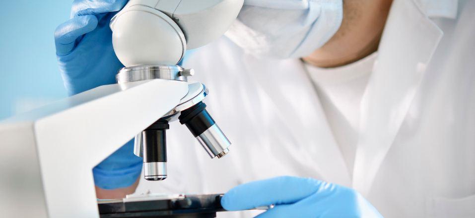 Des chercheurs de l'hopital de Boston viennent de recréer et transplanter un bio-rein sur un rat