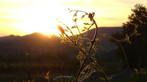 Arbustes : il n'est pas toujours facile de trouver la bonne exposition au soleil - les conseils du jardinier