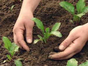 Entretien du jardin : les conseils de Mai