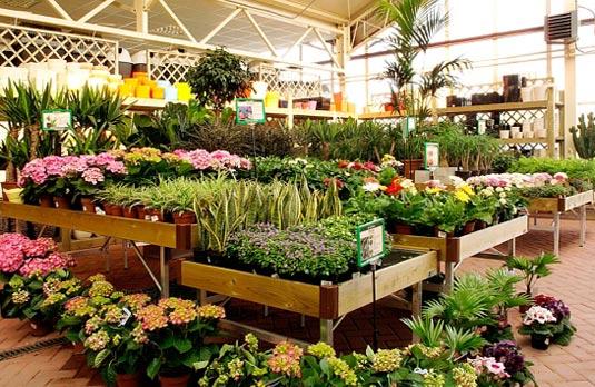 Une jardinerie virtuelle à votre service ?